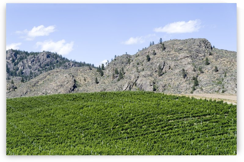 Okanagan Valley wine country 17 by Bob Corson