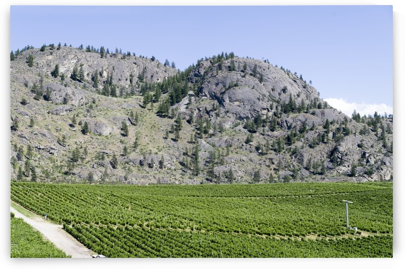 Oliver British Columbia Vineyard 1 by Bob Corson