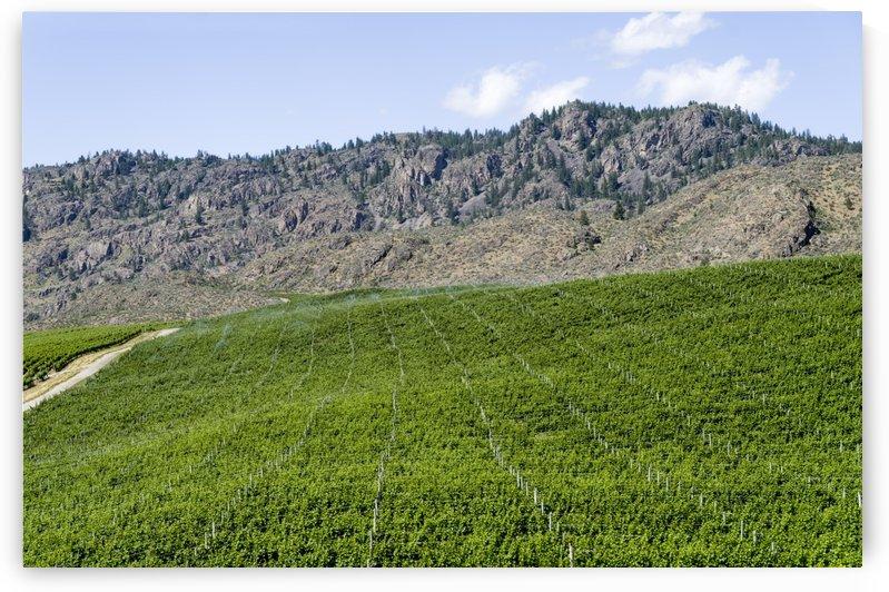 Okanagan Valley wine country 15 by Bob Corson