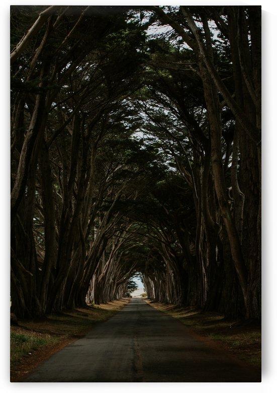 Cypress Tree Tunnel California by StephanieAllard