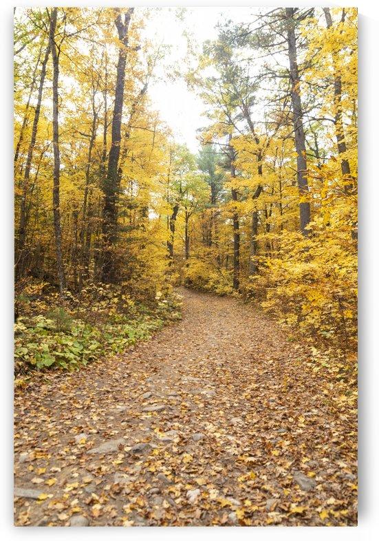 Eagle Nest Trail by Bob Corson