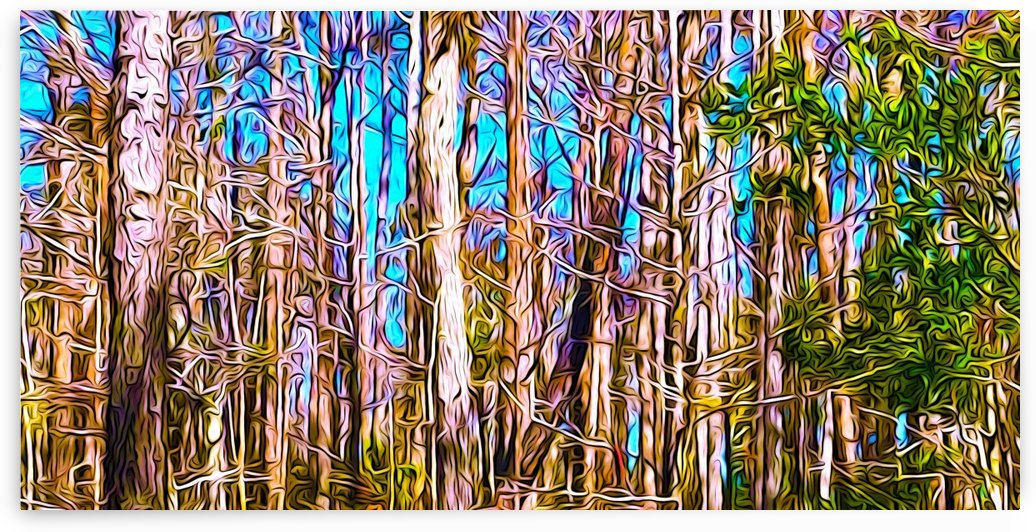 A Slice of Florida Trees by Impression Of Things