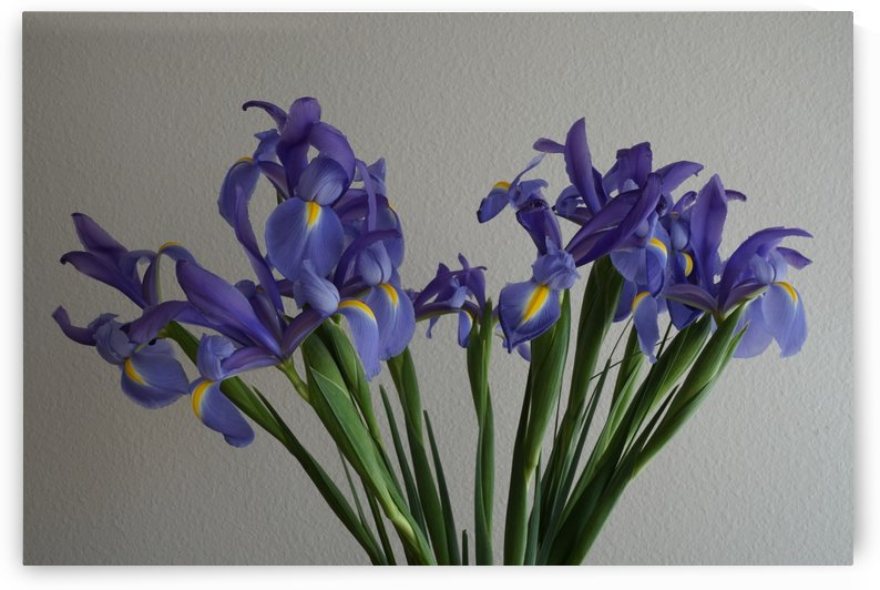 Irises by PedroVit