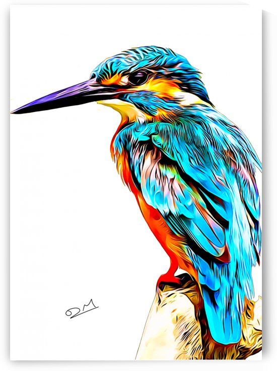 Colourful Kingfisher Illustration by Dan Manton