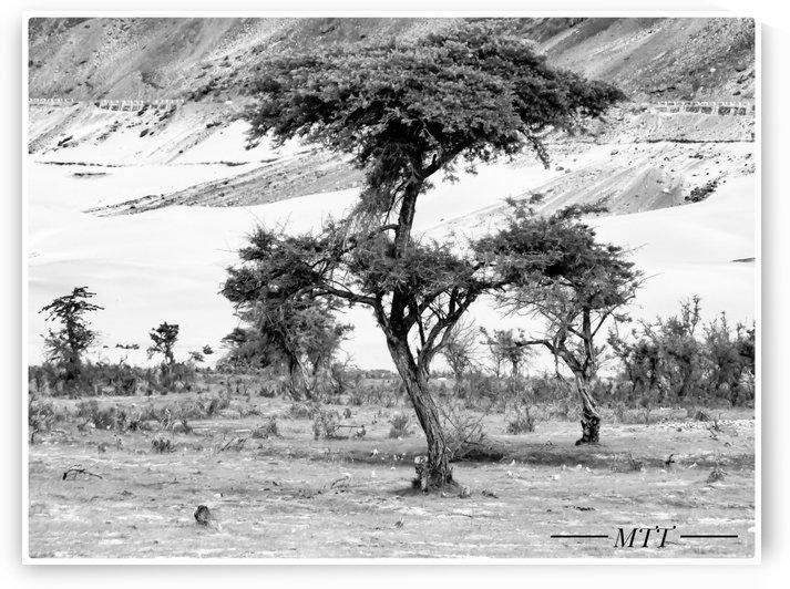 Wierd Tree by MTT