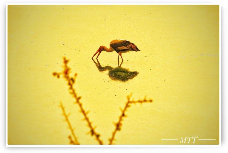 lone bird 2 by MTT