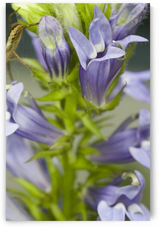 Veronica Plant 3 by Bob Corson