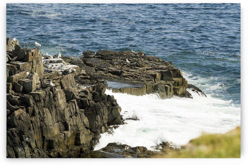 Elliston Newfoundland Coastline 11 by Bob Corson