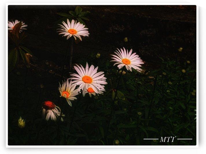 Pond Flowers by MTT