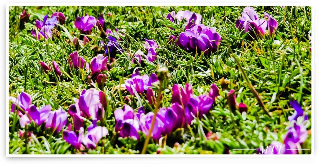 Floral Garden by MTT