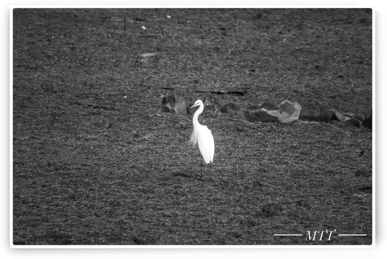 Lone Bird 4 by MTT