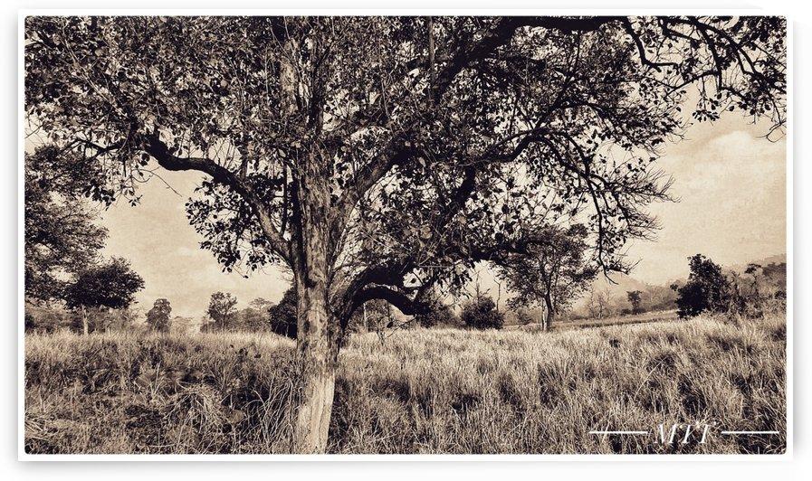 Prairie by MTT