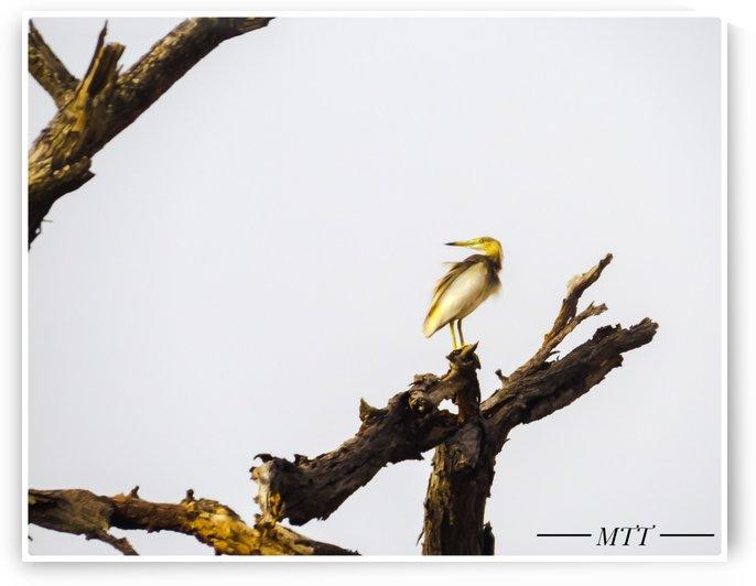 Feathered Bird by MTT