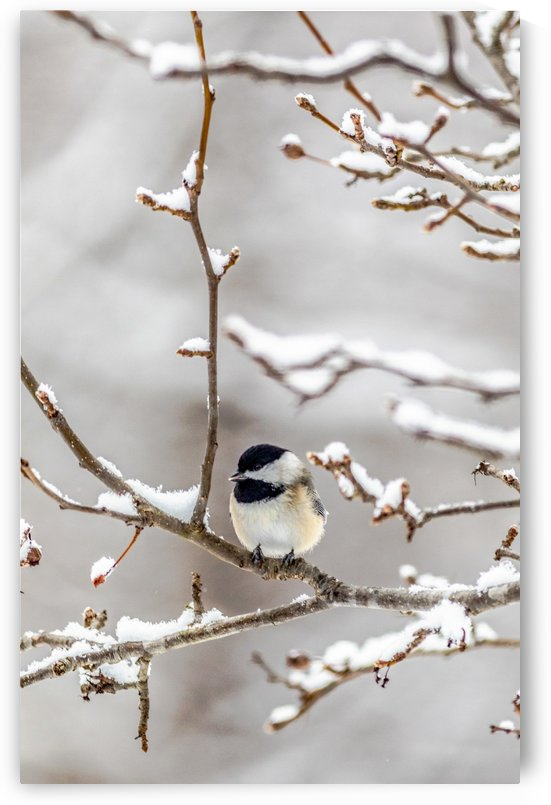 My Little Chicadee by Megan Ratts Photography