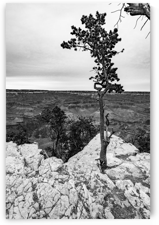 Taking Root by Megan Ratts Photography