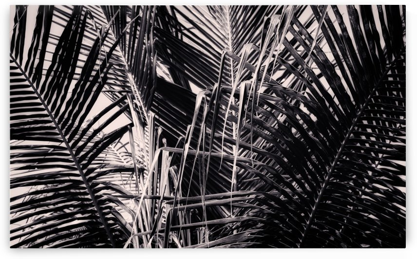 Palm Leaves Geometry by Ira Silence
