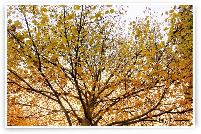 Autumn Tree 3 by MTT