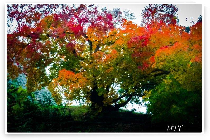 Autumn Tree 2 by MTT