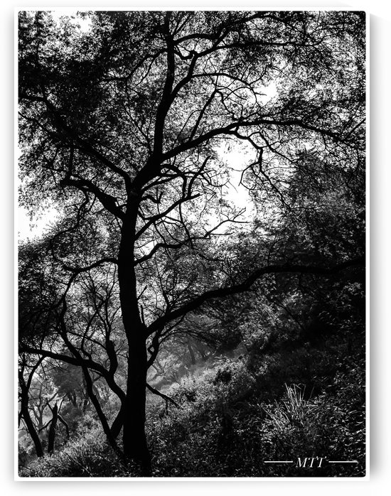 Trees- black and white by MTT