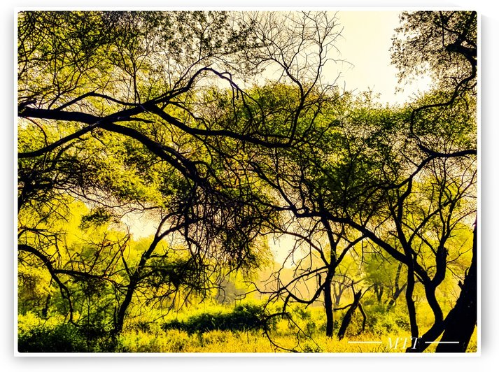 Technicolor forest by MTT
