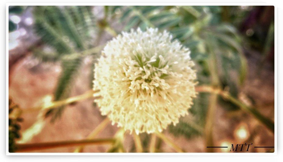 flora microscoped by MTT