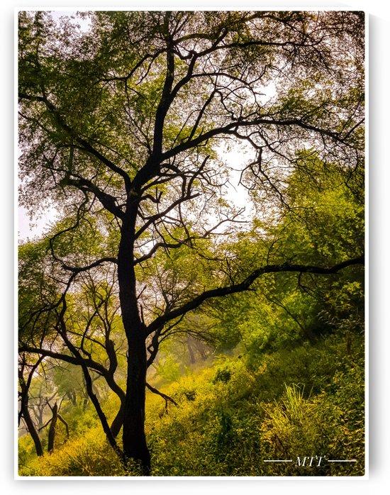 Technicolor tree by MTT