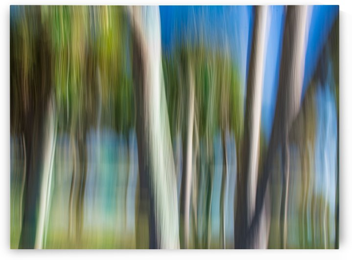 Moving Trees 31 Landcape 52 70 200px by Gene Norris