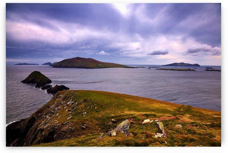 KY 603 Blasket Island View  by Michael Walsh
