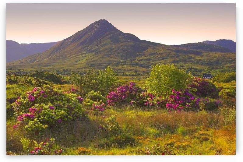 G 096 Connemara by Michael Walsh