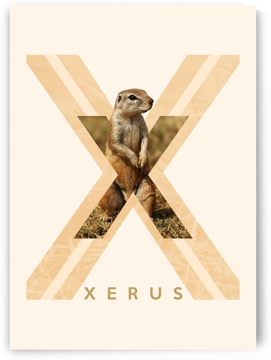 Xerus by ABConcepts