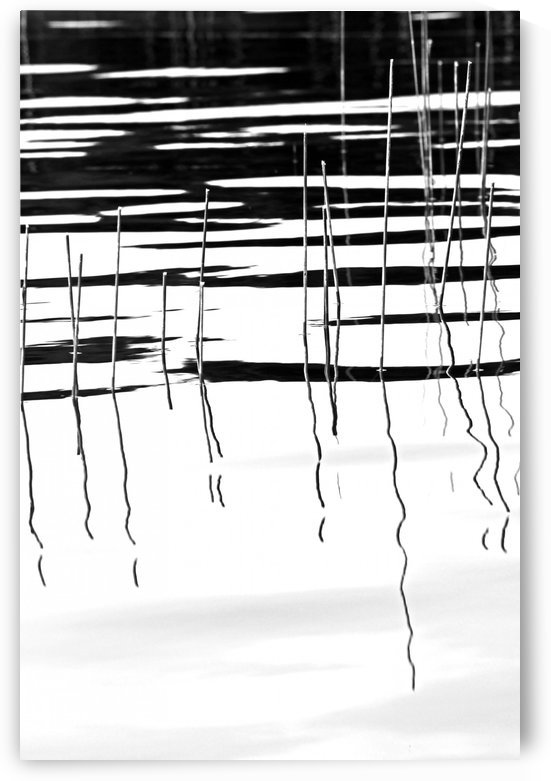 Light And Shadow  Reeds Abstract I by Deb Oppermann