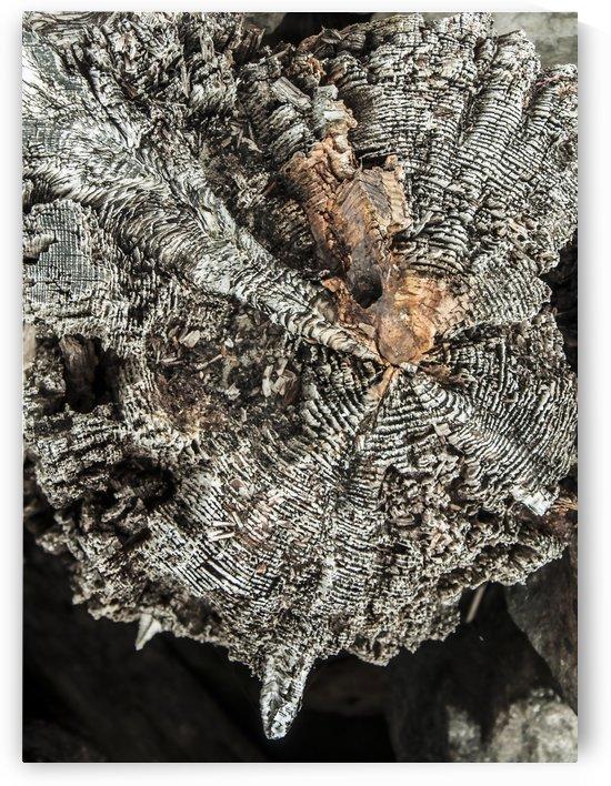 Shore pile 8 by olando lin