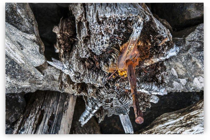 Shore pile 9 by olando lin