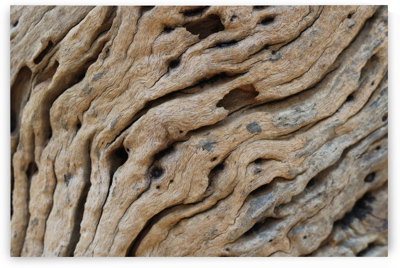 Close-up view rough texture of tree trunk by Krit of Studio OMG