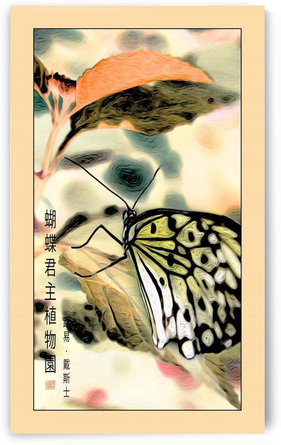 Papillon chinois  by Jean-Louis Desrosiers