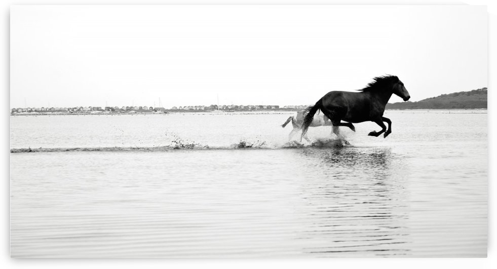 GALLOPING ON WATER by ANDREW LEVER GALLERY