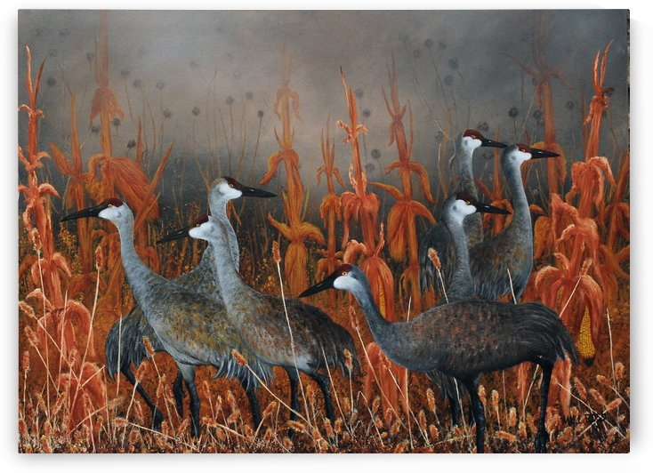 Sandhill Cranes At Monte Vista Colorado by Mike Ross
