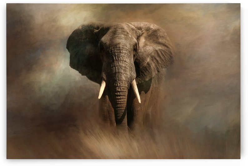 African Elephant by Michel Soucy