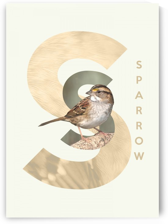 Sparrow by ABConcepts