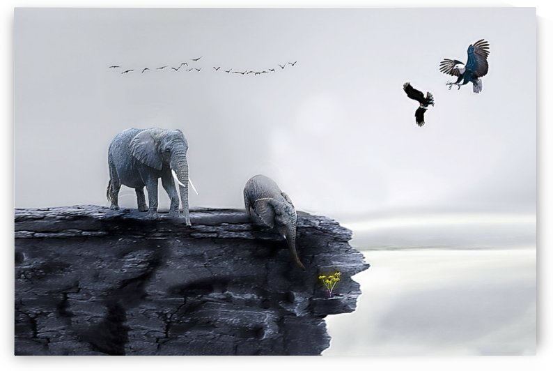 Hope by khaled Aljaber