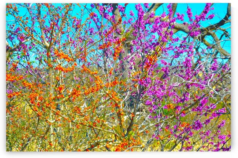 Spring and Autumn by Ann Ciarico