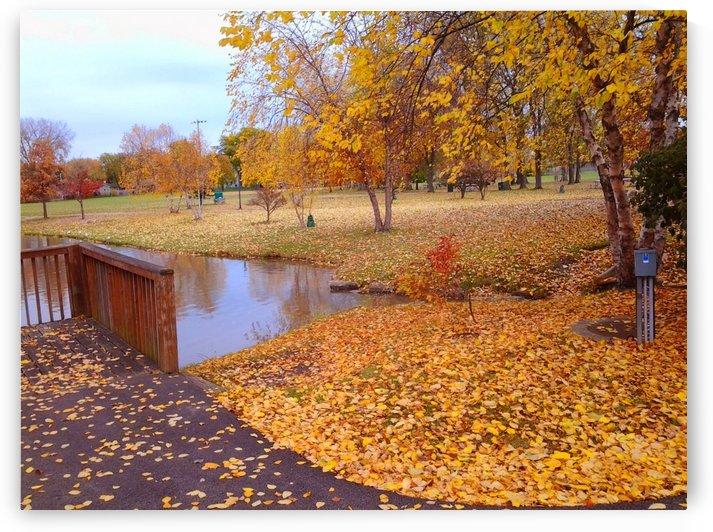 Autumn Day by Ann Ciarico