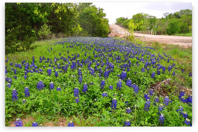 Bluebonnets by Ann Ciarico
