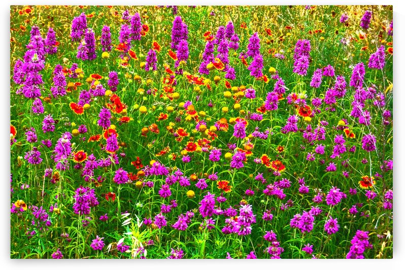 TX wildflowers by Ann Ciarico