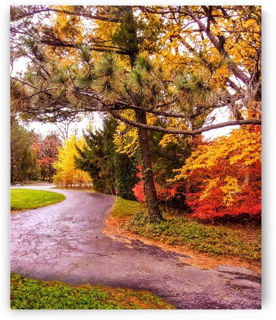 Autumn path by Ann Ciarico