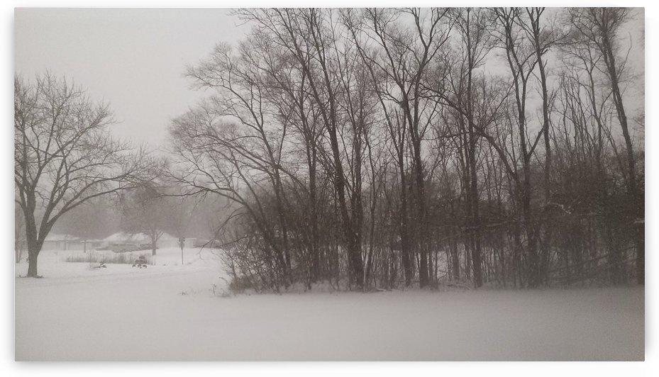 Wintery Trees by Ann Ciarico