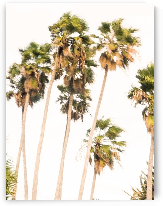 SWAYING PALMS by ANDREW LEVER GALLERY
