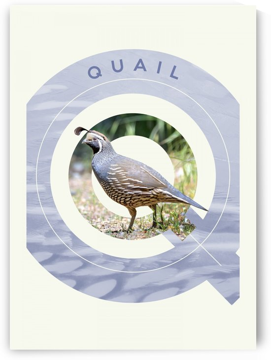 Quail by ABConcepts