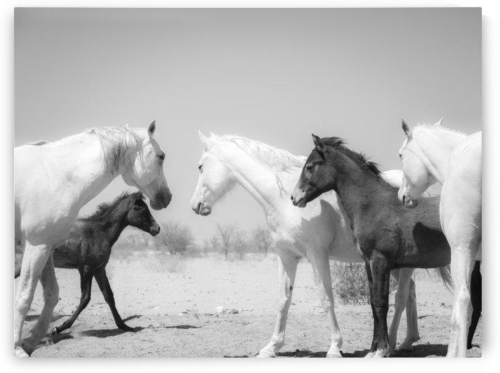 KALAHARI ARABS 2. by ANDREW LEVER GALLERY