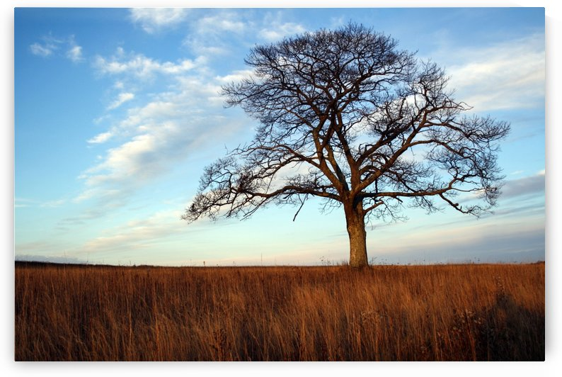 Shubenacadie Tree by Roman Buchhofer